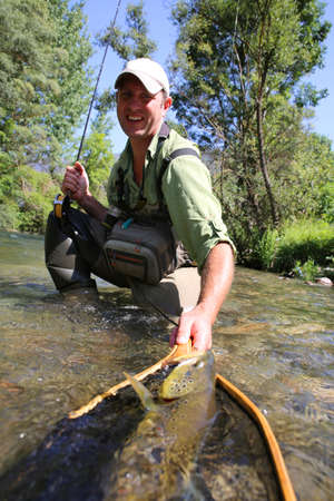 flyfishing: Fly-fisherman taking brown trout out of water with landing net Stock Photo