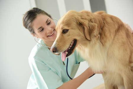Tierarzt untersuchen Hund Herzschlag