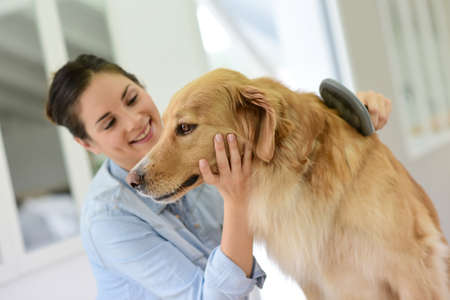 mujer con perro: Mujer joven cepillarse el pelo de su perro Foto de archivo