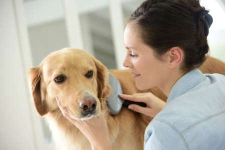 grooming: Young woman brushing her dogs hair
