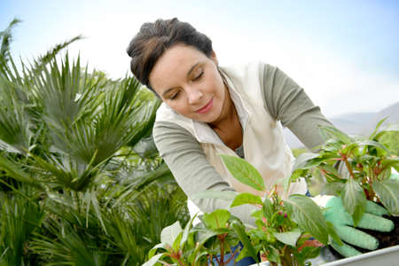 woman gardening: Middle-aged woman gardening outside Stock Photo