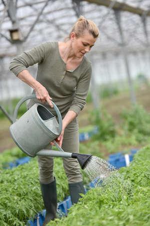 regando plantas: Granjero de plantas de riego del invernadero Foto de archivo