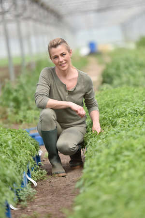 knelt: Farming worker in greenhouse