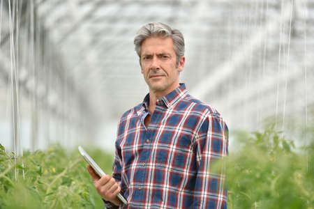 controling: Farmer with digital tablet standing in greenhouse