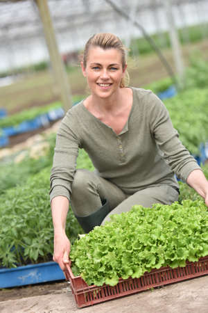knelt: Farmer in greenhouse holding tray of organic plant