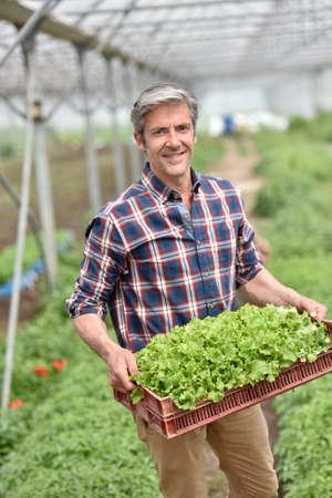 Farmer en la bandeja de retención de efecto invernadero de la planta orgánica