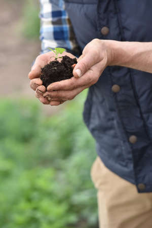 land plant: Farmer using loam to plant new seeds