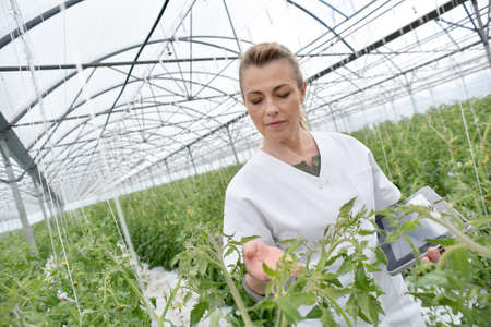 agronomist: Agronomist analysing plants in greenhouse