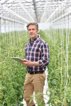 Agricultor de invernadero comprobación de las plantas de tomate