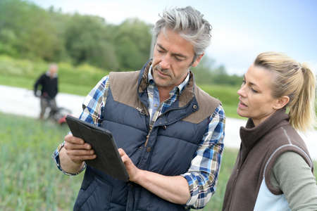 Farmers in field inspecting crop quality Stock Photo