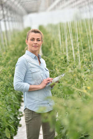 smiling woman in a greenhouse: Woman in greenhouse checking tomato plants Stock Photo