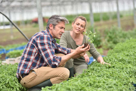knelt: Couple of farmers checking plants in greenhouse Stock Photo