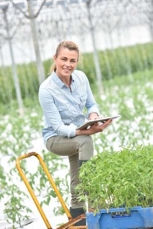 Mujer en invernadero comprobación de las plantas de tomate