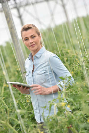 agronomist: Woman in greenhouse checking tomato plants Stock Photo