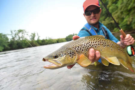brown trout: Fly-fisherman holding brown trout out of the water