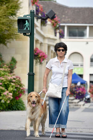 blind person: Senior blind woman crossing the street with help of guide dog Stock Photo