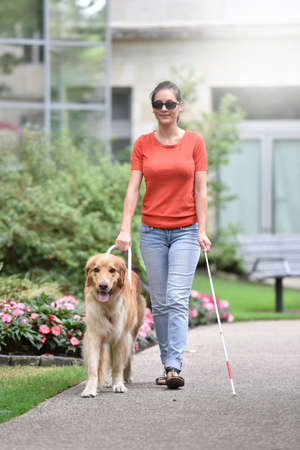 Blind woman walking in park with dog assitance 스톡 콘텐츠
