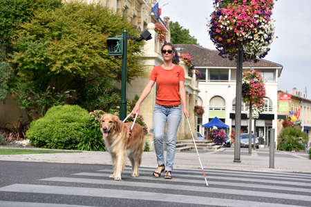Blind woman crossing the street with help of guide dog Фото со стока