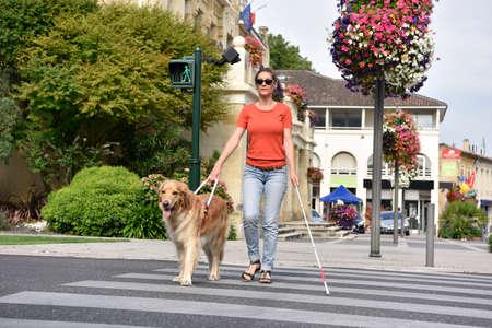 Niewidoma kobieta przejście przez ulicę przy pomocy psa przewodnika