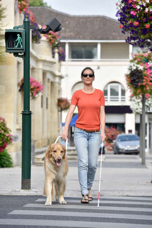 crossing street: Blind woman crossing the street with help of guide dog Stock Photo