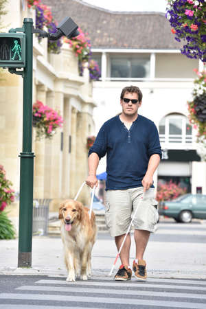 Blind man crossing the street with help of guide dog Stock Photo