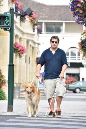 ciego de cruzar la calle con la ayuda de perros guía Foto de archivo