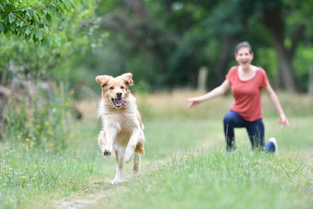 Woman playing with throwing frisbee to dog 스톡 콘텐츠