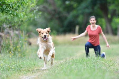 perro corriendo: Mujer que juega con el disco volador que lanza al perro