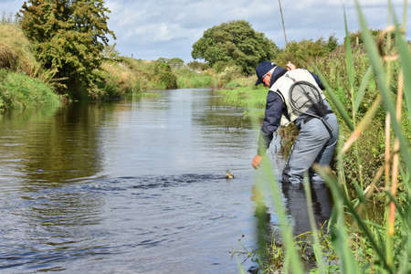 brown trout: Fly-fisherman catching trout in irish river