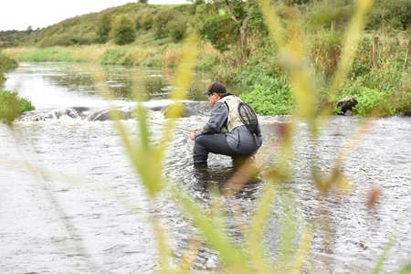 knelt: Back view of fly-fisherman fishing in river