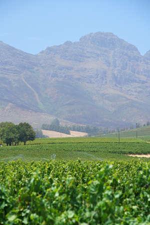 View of Stellenbosch vineyards, South Africa Stock Photo