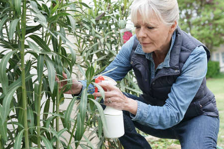 Senior woman in garden spraying insecticide over plants Stock Photo