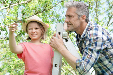 complicity: Man with young girl looking at fruit trees buds