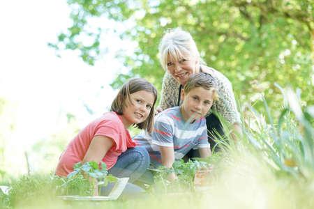 grandkids: Elderly woman having fun gardening with grandkids Stock Photo