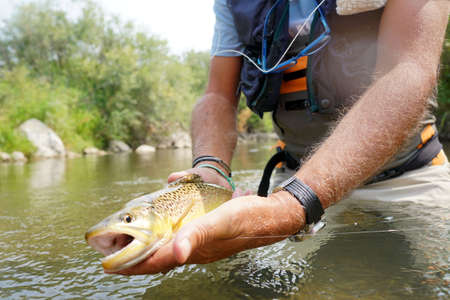 Closeup of brown trout being caught by fly fisherman