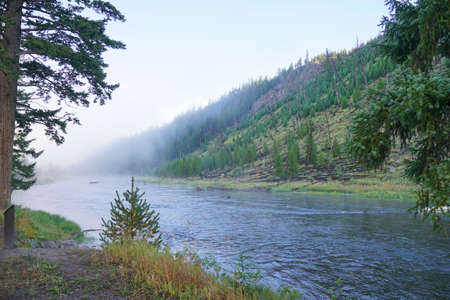View of the Madison river, Yellowstone national Park