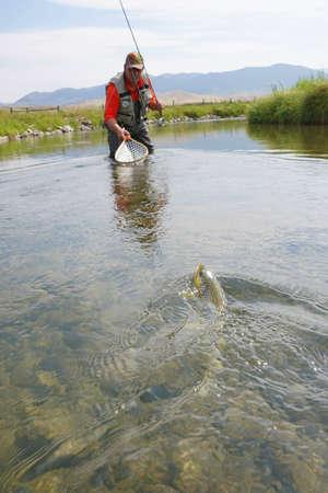 Vliegvisser die bruine forel in rivier van de staat van Montana vangt
