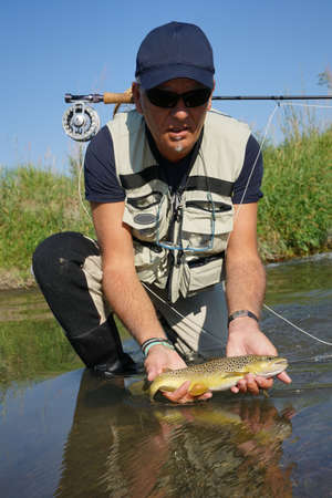 knelt: Fly fisherman catching brown trout in river