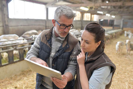 Sheep breeder with veterinary in shed using digital tablet Фото со стока - 99813866
