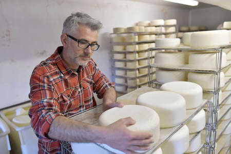 Cheese maker checking production in cheese cellar