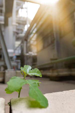 Green leaf in recycling factory Reklamní fotografie
