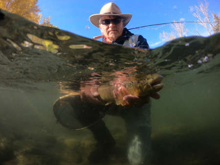catching a brown trout by a fly fisherman Banco de Imagens