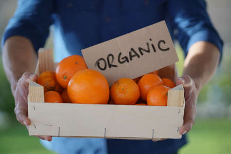 Close up of local farmer holding organic oranges and clementines in crate with organic sign