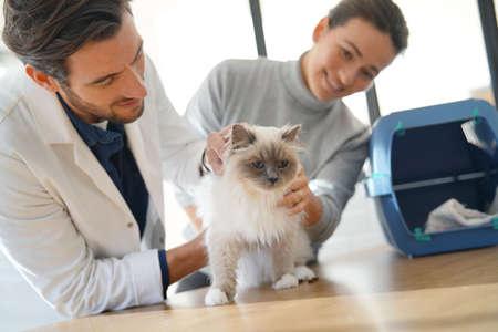 Beau vétérinaire regardant un beau chat dans une clinique avec son propriétaire
