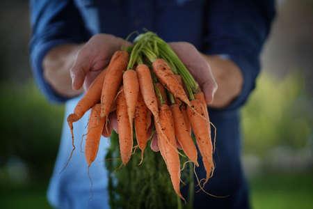 Close up of local farmers hands holding organic carrots Reklamní fotografie