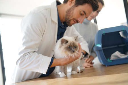 Handsome vet looking at beautiful cat in clinic with owner