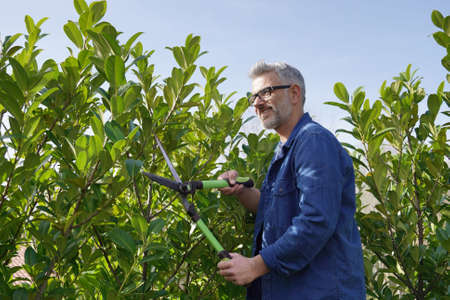 Man trimming hedge with gardening sheers