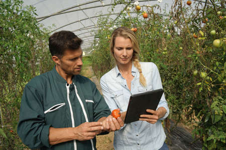 Farmer with agronomist in greenhouse using digital tablet Banco de Imagens