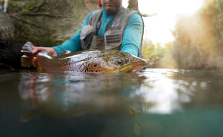 taking a big brown trout in the fly Banque d'images