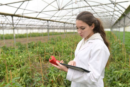 Young agronomist in greenhouse controlling vegetables Banque d'images